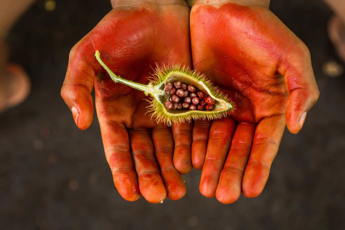 Achiote Fruit in the Amazon Rainforest © Valdemir Cunha / Greenpeace