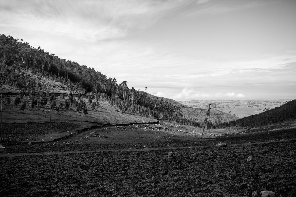 One of the protected forests surrounded by farming plots in North Shoa, Ethiopia. Projections indicate that unless action is taken, an area of 9 million ha might be deforested between 2010 and 2030. © Hilina Abebe