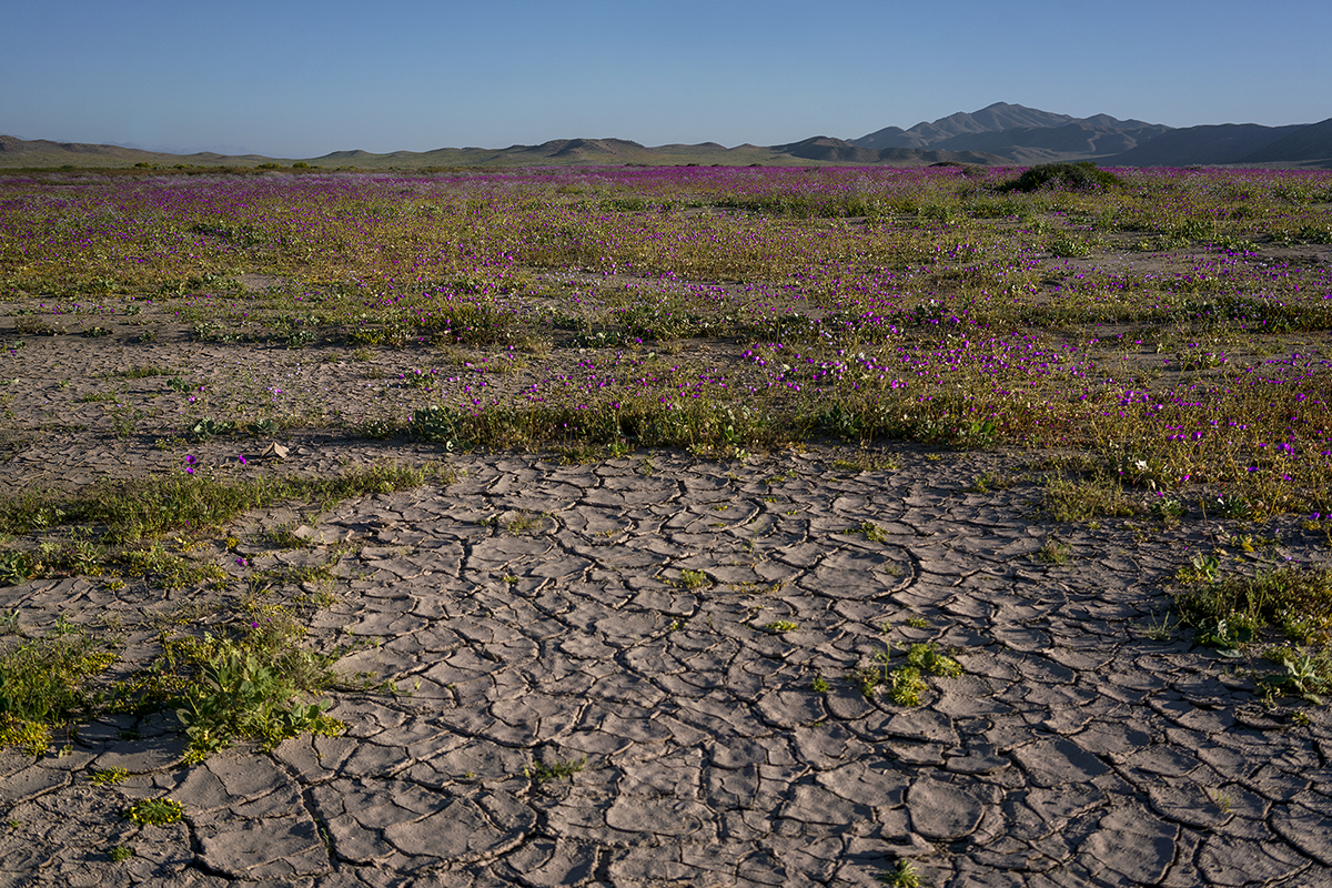 """Tamara Merino's photo series """"Flowing Desert"""". Taken in Atacama desert in Chile, which is often referred to as the world's driest desert. © Tamara Merino"""