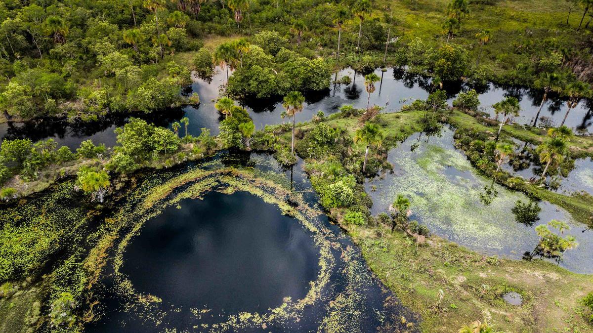 Cerrado Biome in Brazil. © Fernanda Ligabue / Greenpeace