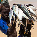 Everyday life in the fishing village of Fass Boye, Senegal © Elodie Martial / Greenpeace