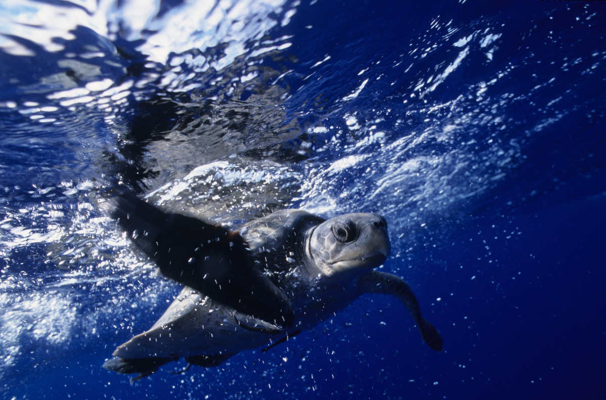 Fisheries in the Western Pacific Ocean. © Greenpeace / Roger Grace
