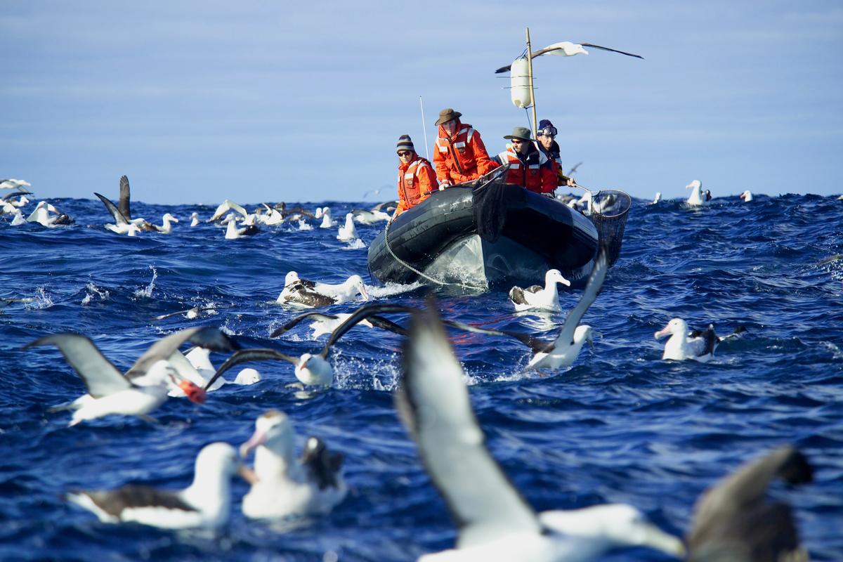 Greenpeace Collecting Bycatch. © Greenpeace / Roger Grace
