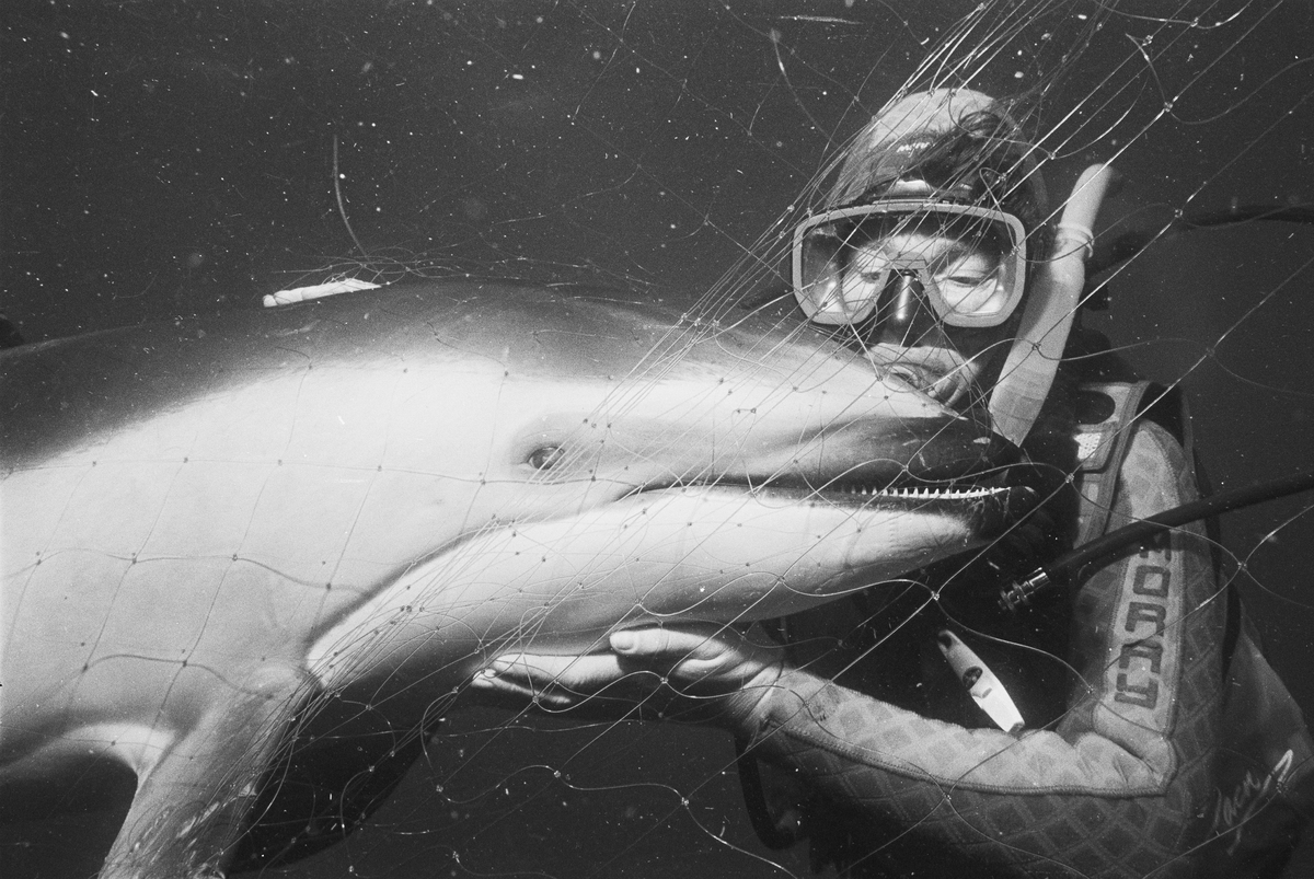 Linda Ingham with Pacific Dolphin. © Greenpeace / Roger Grace