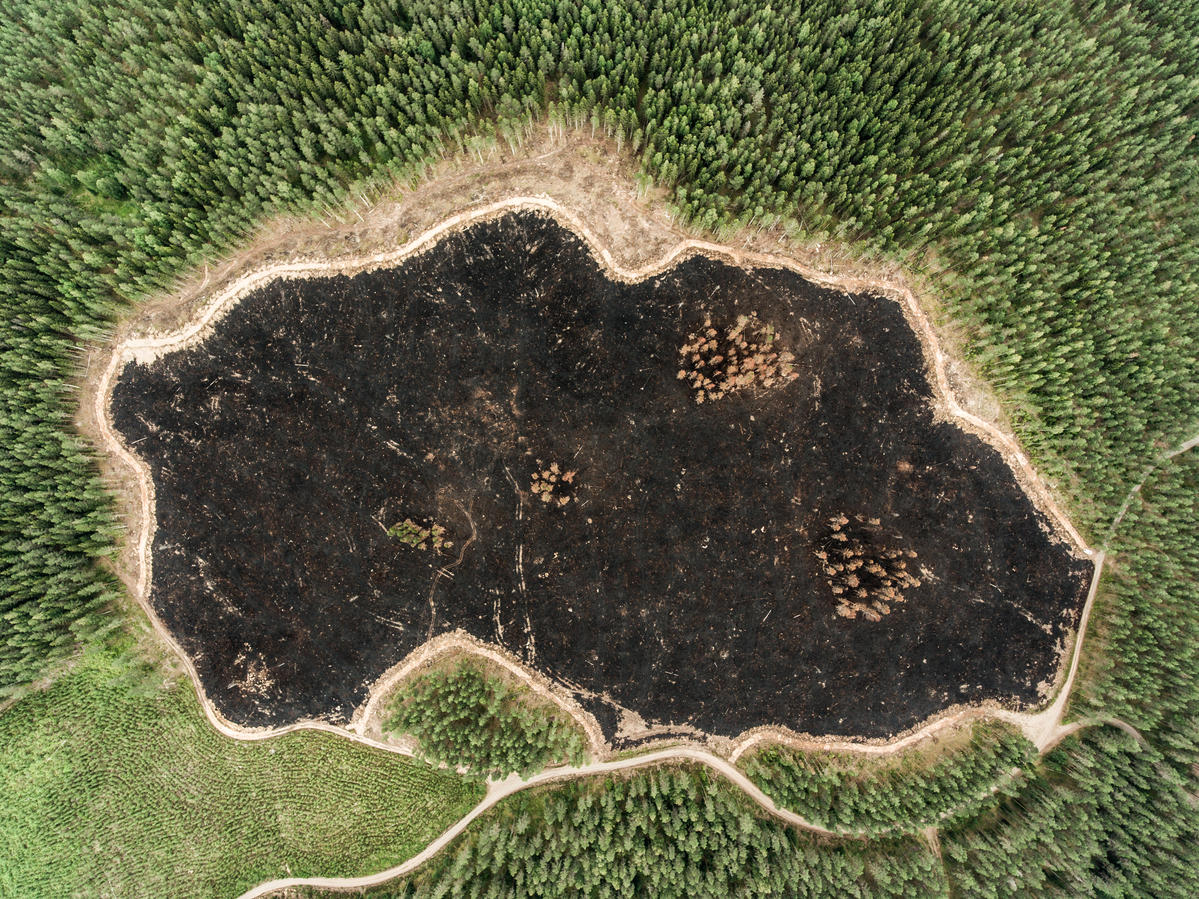 Forest Destruction in Finland. © Jani Sipilä / Greenpeace