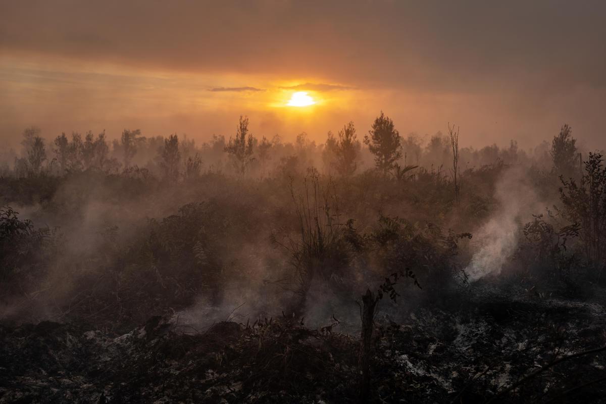 Forest Fires in Pulang Pisau, Central Kalimantan. © Ulet Ifansasti / Greenpeace