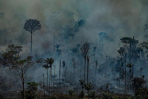 Forest Fires in Amazon (2019). © Victor Moriyama / Greenpeace