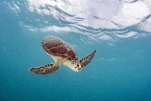 Sargasso Sea Leg of Pole to Pole Expedition. © Shane Gross / Greenpeace
