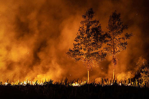 Forest Fires in Jekan Raya, Central Kalimantan. © Ulet  Ifansasti / Greenpeace