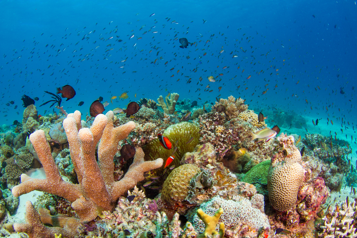 Corals at Palawan Archipelago in the Philippines. © Steve De Neef