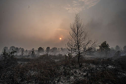 Wildfires in Palangkaraya, Indonesia © Jurnasyanto Sukarno / Greenpeace