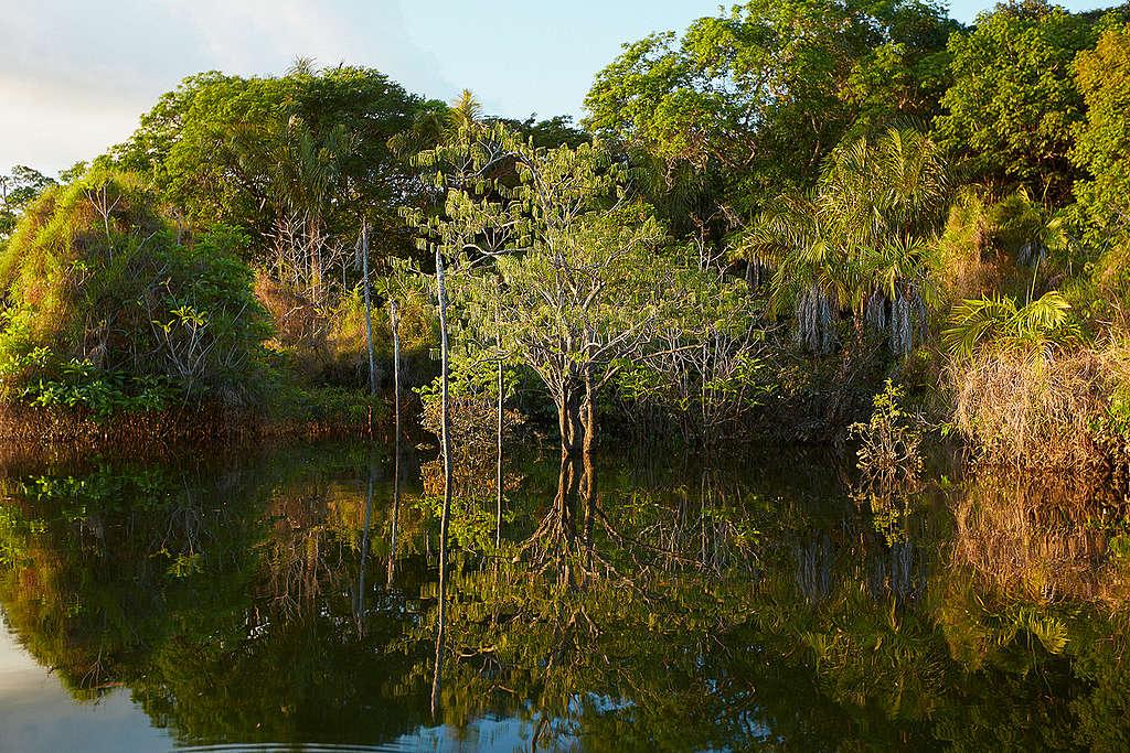 The Tapajós National Forest in Brazil. © Greenpeace / John Novis