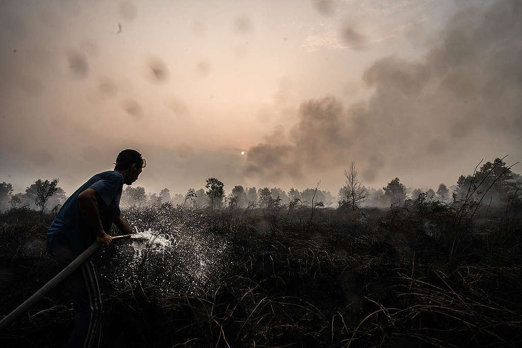 A volunteer extinguishes fires in the peatland area in Central Kalimantan, Indonesia. © Jurnasyanto Sukarno / Greenpeace