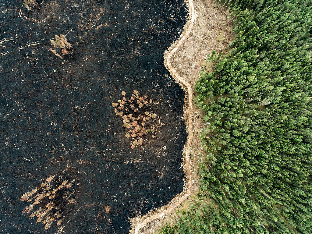An area of forest in southern Finland which was logged and later burned. © Jani Sipilä / Greenpeace