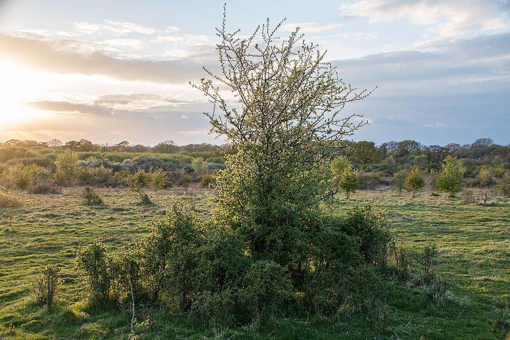 Knepp wildland © Charlie Burrell