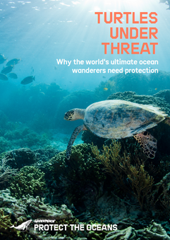Turtles Under Threat Cover