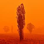 Climate Emergency: The ravaging Australian fires