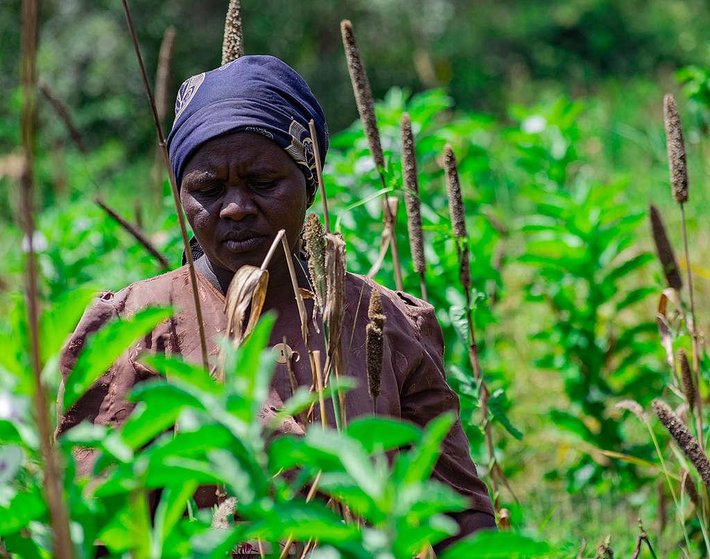 Locust Invasion in Mwingi, Kitui County in Kenya. © Greenpeace / Paul Basweti