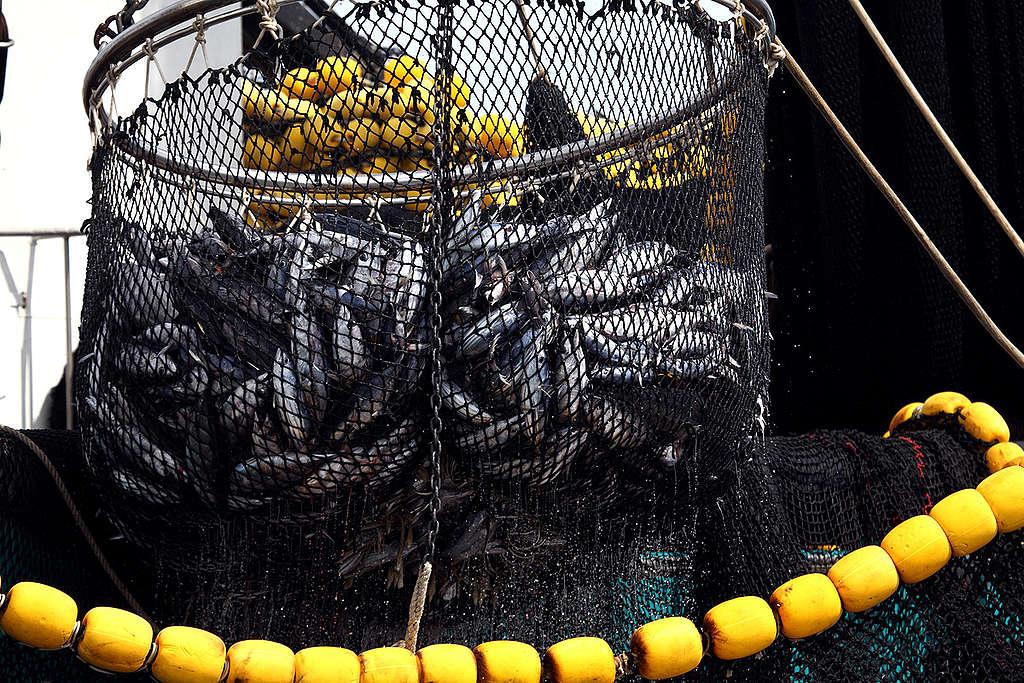 Purse Seiner Fishing in the Indian Ocean. © Jiri Rezac / Greenpeace