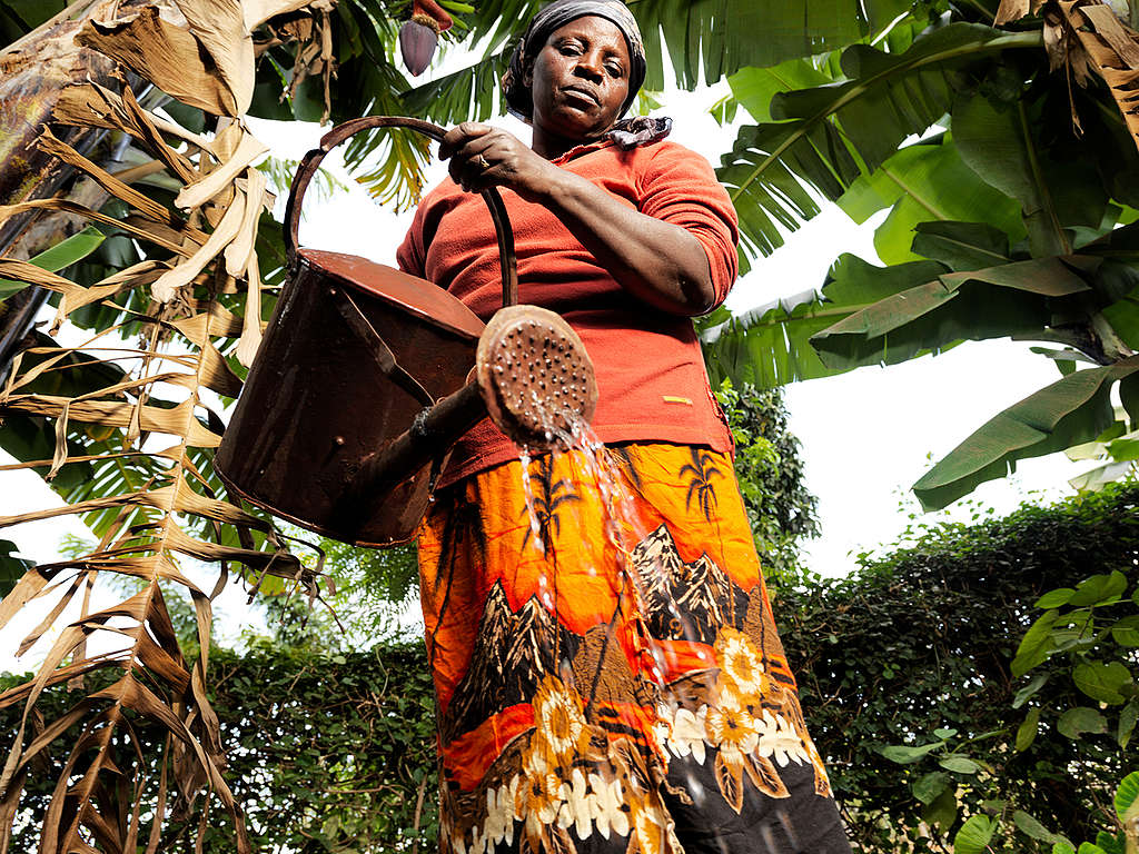 Farmer Janet Muriungi in Kenya. © Peter Caton / Greenpeace