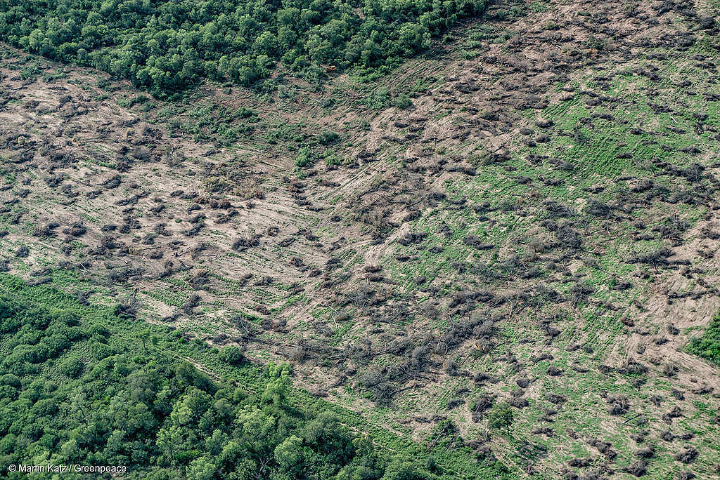 picture showing deforestation for farming and agriculture in chaco province in Argentina