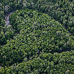 Aerial view of primary forest near the river Digul in southern Papua. © Ulet Ifansasti / Greenpeace