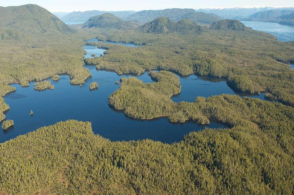 Great Bear Rainforest in Canada. © Oliver Salge / Greenpeace