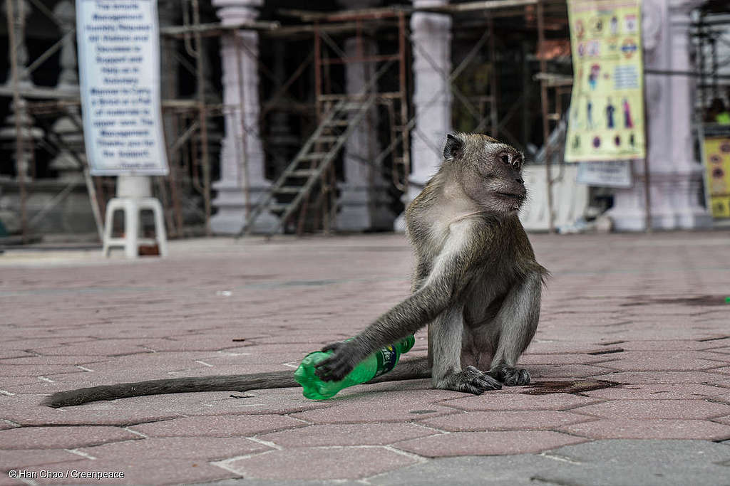 Monkeys dig some food from the trash bins end up eating plastic thrown by the tourists of Batu Caves, Malaysia. Greenpeace volunteers and suppoters hold a waste clean-up at Batu Cave, Malaysia during Earth Day event to show their care to the nature and religious place.  Greenpeace is calling for the people in Malaysia to start reducing the use of single-use plastic. Batu Caves is a an iconic and popular tourist attraction in Selangor. A site of a Hindu temple and shrine, It also attracts thousands of worshippers and tourists, especially during the annual Hindu festival, Thaipusam