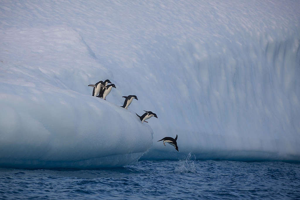 Adelie penguins on icebergs near Paulet Island in the Erebus and Terror Gulf in the entrance to the Weddell Sea in Antarctica. © Abbie Trayler-Smith / Greenpeace