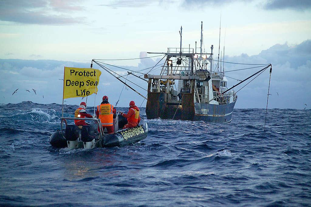 Monitoring Deep Sea Trawling, Tasman Sea. © Greenpeace / Malcolm Pullman