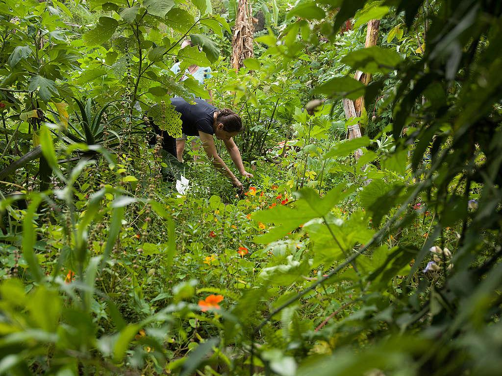 Casa Verde in Brazil. © Peter Caton / Greenpeace
