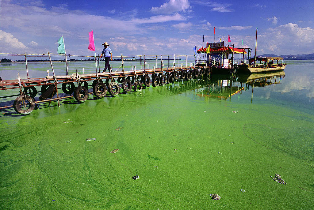 Algal Bloom in Dianchi Lake. © Yunsheng Geng / Greenpeace
