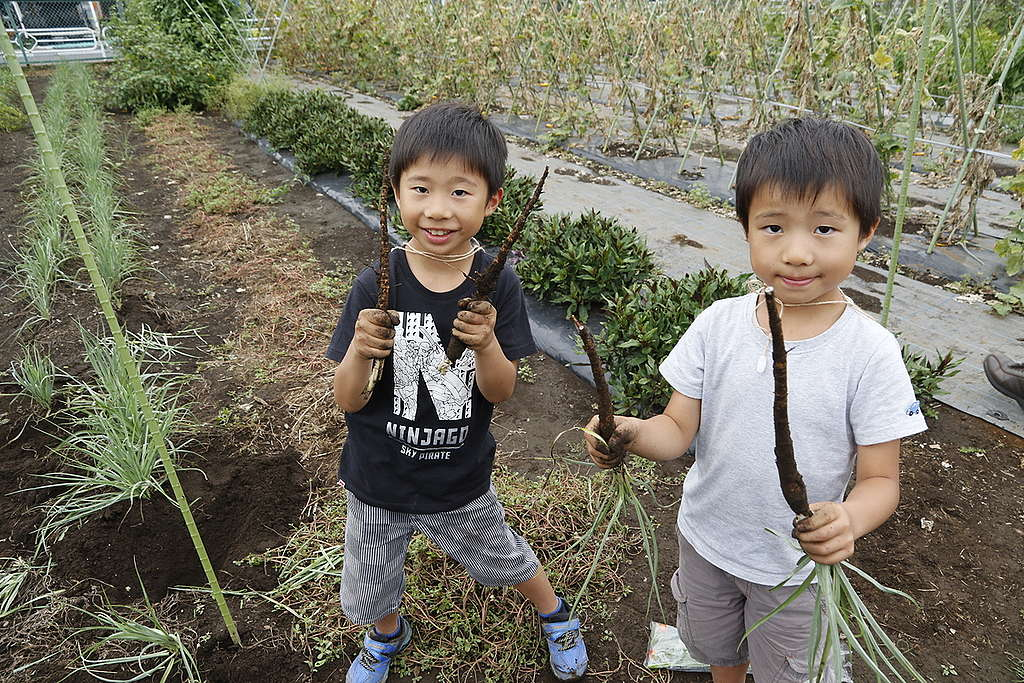 Harvesting Plants during an Ecological Agriculture and Bees Event in Japan. © Kengo Yoda / Greenpeace