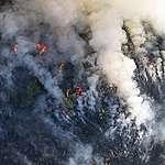 פריצת דרך: סוחרת שמן הדקלים הגדולה בעולם מפסיקה את העבודה עם משמידי יערות הגשם