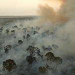 דו״ח גרינפיס: שופרסל שותפים להרס יערות האמזונס