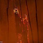 כל מה שאתם צריכים לדעת על השריפות האיומות באוסטרליה