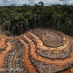 L'Europa deve smettere di importare deforestazione!