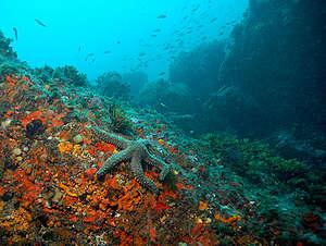 Underwater scene - Mediterranean 2006. © Roger Grace