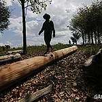 Amazzonia, primo successo dei Ka'apor nella lotta alla deforestazione