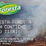 Questo Natale dona per salvare la foresta indonesiana