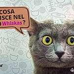 Cosa finisce nel mio Whiskas?