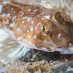 3 buoni motivi per cui abbiamo bisogno di santuari marini
