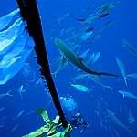 Pescatori e pesci al collasso: ecco la crisi globale della pesca