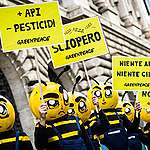 Pesticidi, presto lo stop in Europa all'insetticida thiacloprid