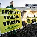 Basta deforestazione per l'olio di palma!