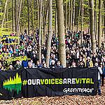 """""""Caso Resolute"""": respinte le accuse di frode e corruzione contro Greenpeace"""