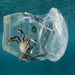 Vi raccontiamo come la plastica usa e getta soffoca il Pianeta