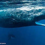 Proteggiamo gli oceani da un Polo all'altro!