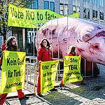 """Greenpeace: """"Il Parlamento Europeo deve scegliere: aziende sostenibili o allevamenti intensivi"""""""