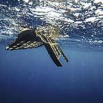 Plastica, Greenpeace naviga nell'hotspot del Tirreno